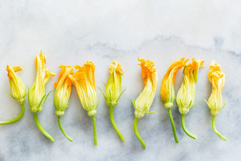 Squash Blossom neatly laid out in a line on a marble surface.